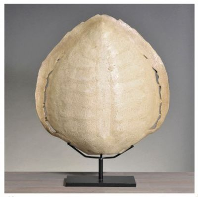 Turtle Carapace Moulding Ivory XL